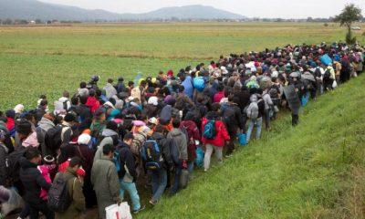 Osztrákok a migrációról